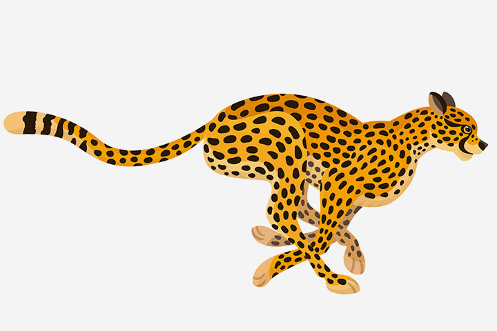 The Cheetah by Gracie Robertson