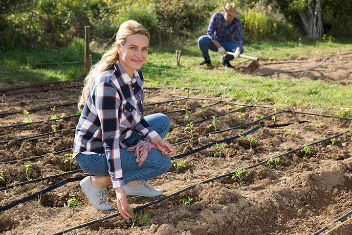 Try homesteading: