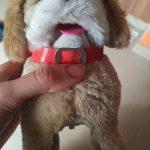Webby Electronic Jumping Puppy Toy-Pretty ok..-By ramya