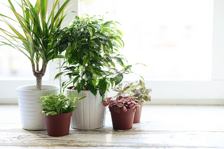 Adopt Some Indoor Plants