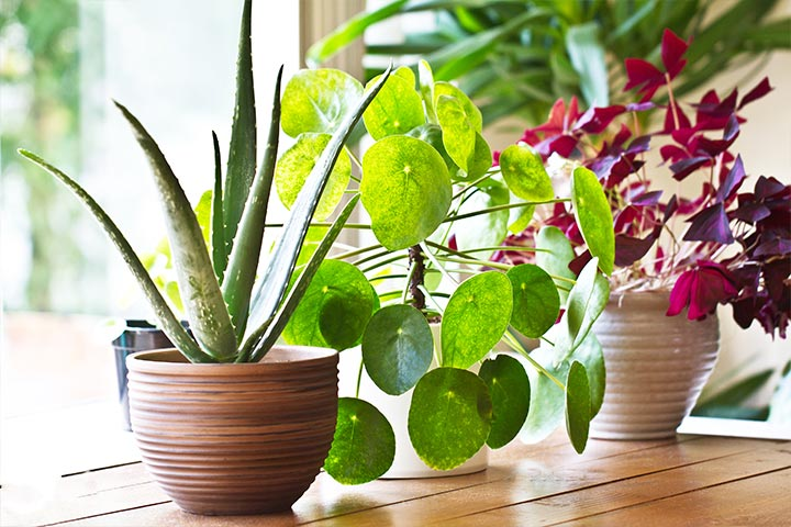 Buy Indoor Purifying Plants