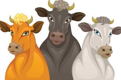 बैल और शेर की कहानी   Lion And Three Bulls Story in hindi