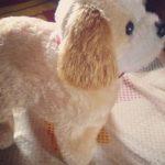 Webby Electronic Jumping Puppy Toy-Jumping dog-By diya_sanesh