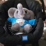 Deals India Panda And Elephant Soft Toy Combo-Cuddly companions!-By mridula_k