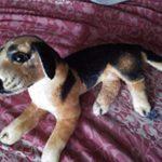 Tickles Sitting Dog Soft Toy-Sitting dog soft toy-By dharanirajesh16