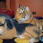 Deals India Tiger And Black Puppy Set-Deals india tiger and black puppy-By amarjeet