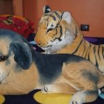 Deals India Tiger And Black Puppy Set-Nice combo-By sumi
