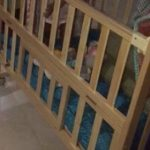 Babyhug Kelly Wooden Cot With Detachable Bassinet & Mosquito Net-babyhug kelly cot-By dharanirajesh16