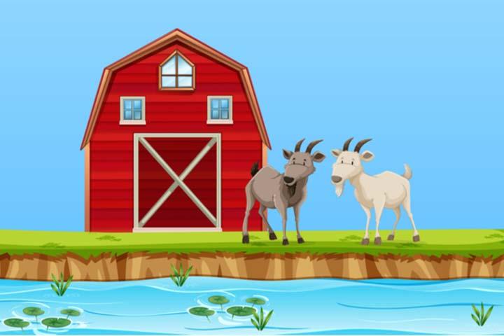 Two stupid goats