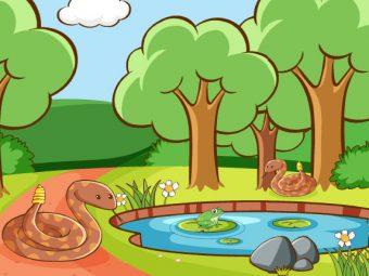 सांप की सवारी करने वाले मेंढक की कहानी | Frogs That Rode A Snake Story In Hindi