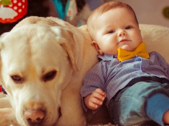 The Beautiful Bond Between Babies And Dogs