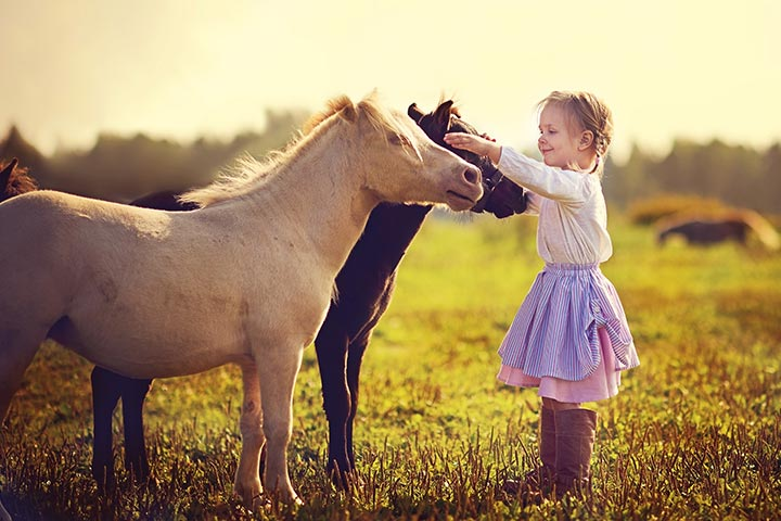 25 Informative And Fun Facts About Horses For Kids Web