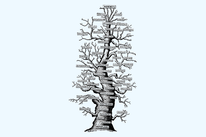 Vertical family tree