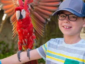 25 Interesting Facts And Information About Parrots For Kids