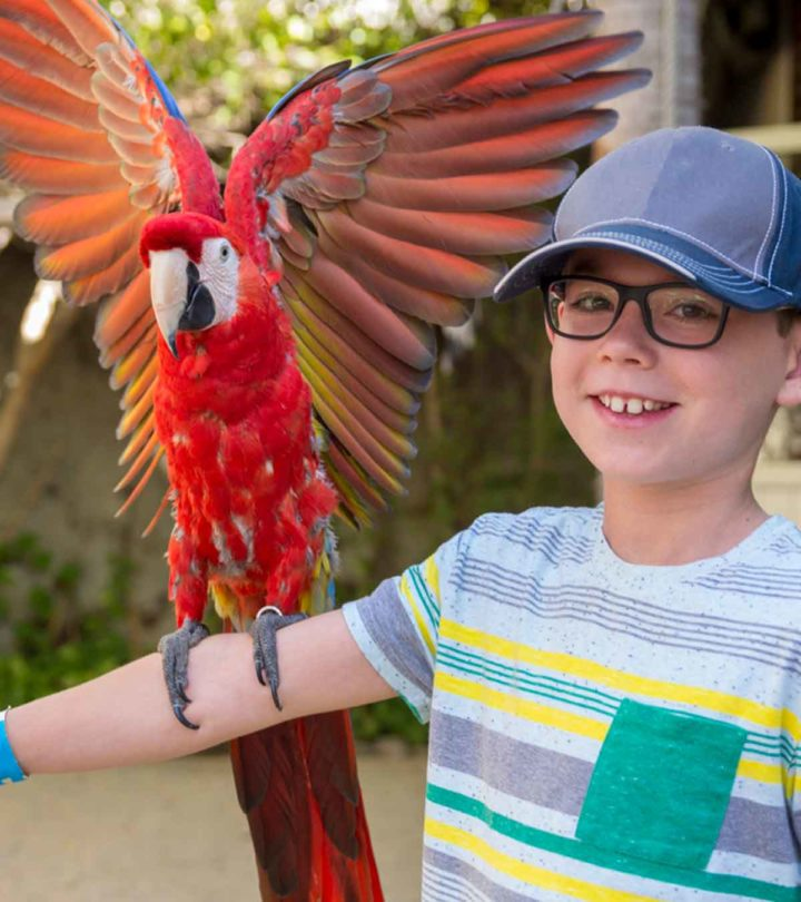 Interesting Facts And Information About Parrots For Kids