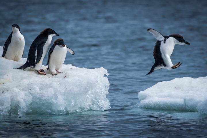 30 Interesting And Fun Facts About Penguins For Kids-1