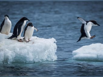 30 Interesting And Fun Facts About Penguins For Kids