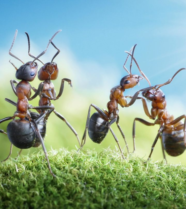 30 Interesting Information And Facts About Ants For Kids Web
