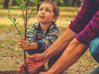 50+ Interesting Facts And Information About Plants For Kids