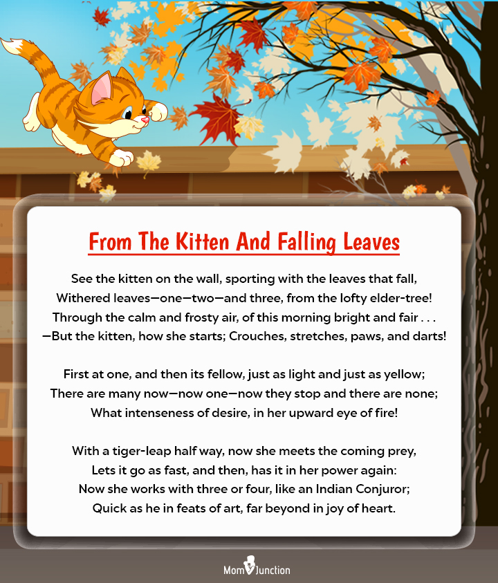 From The Kitten And Falling Leaves