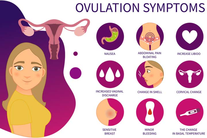 Ovulation Signs And Symptoms In Hindi-1