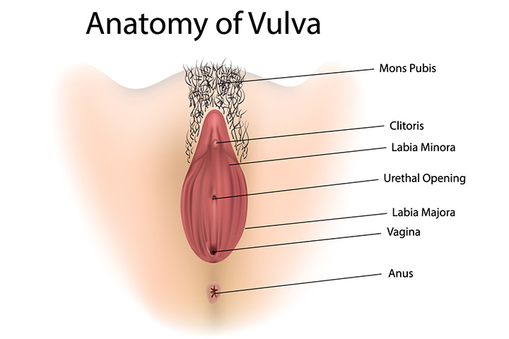Parts Of The Female Reproductive System1