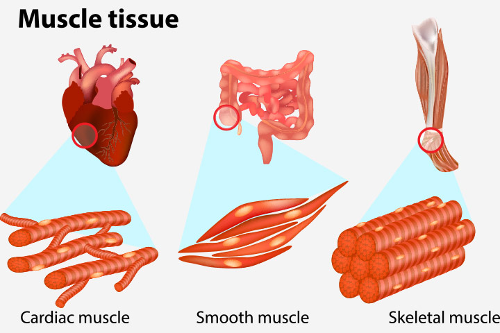 human body comprises three kinds