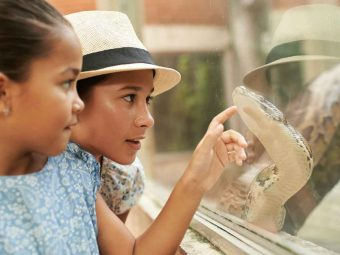 50 Fun And Interesting Facts About Snakes, For Kids