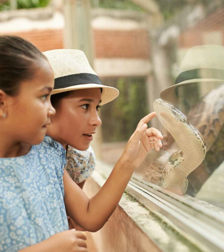Fun And Interesting Facts About Snakes, For Kids