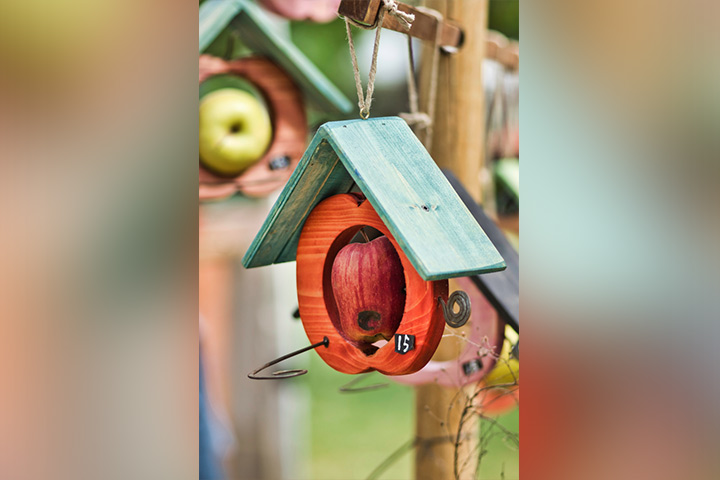Bird feeders out of apples