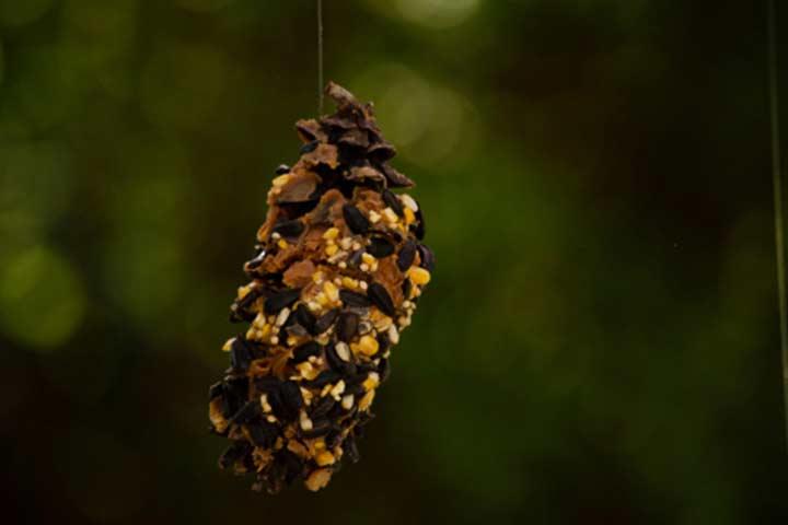 Pretty pine cone bird feeder
