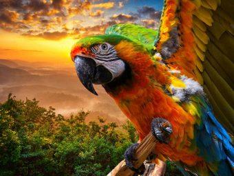 अलिफ लैला - भद्र पुरुष और उसके तोते की कहानी