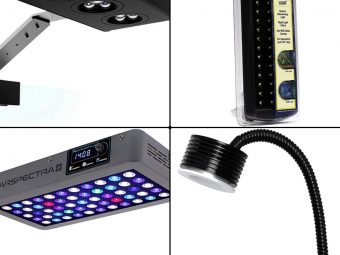 15 Best LED Aquarium Lights in 2021