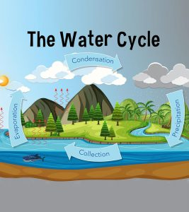 Water Cycle For Kids Diagram, Information, Facts, And Activities