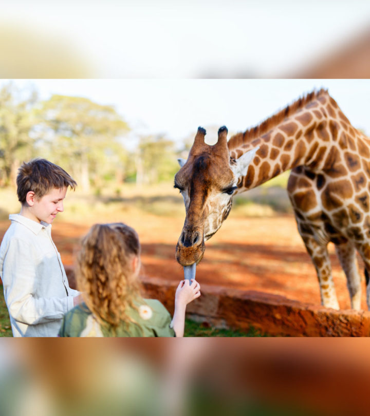 33 Informative And Fun Facts About Giraffes For Kids