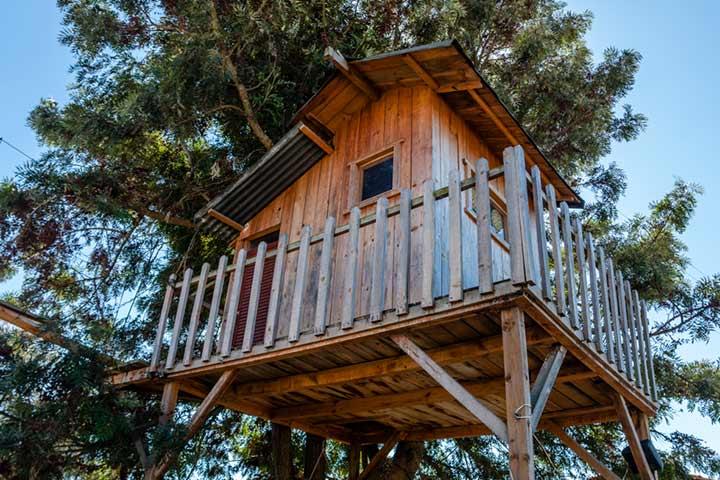 The treeless treehouse