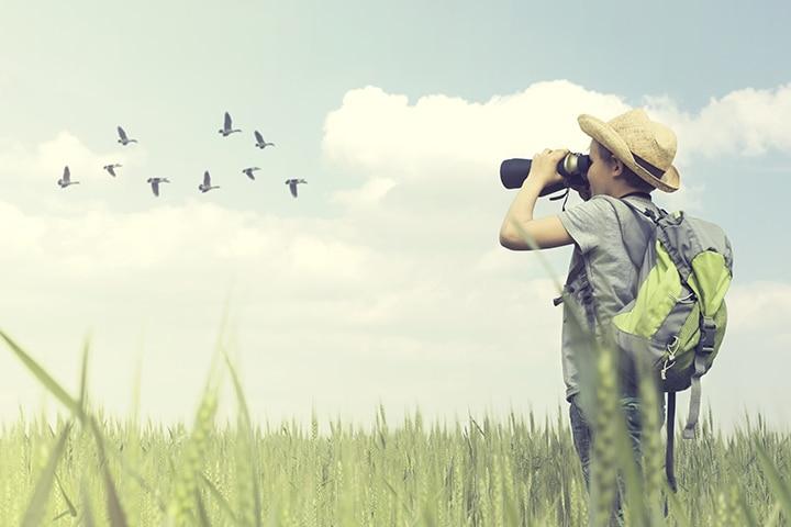 Go birdwatching in the backyard