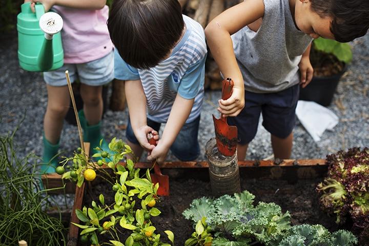 Tend a vegetable garden