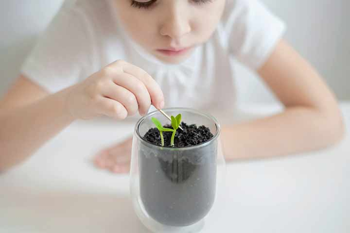 Parts Of A Plant Diagram, Functions And Fun Facts For Kids