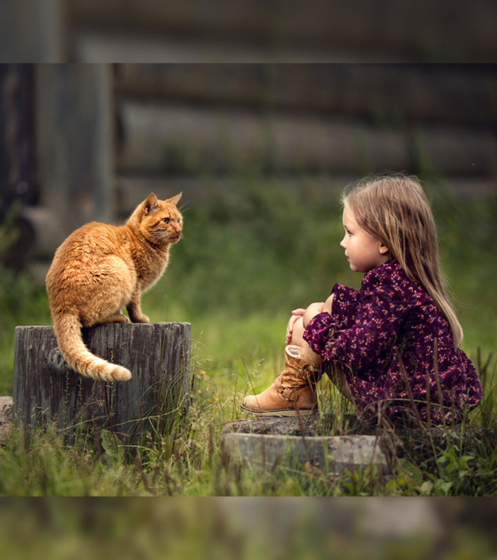Interesting Information And Facts About Cats For Kids