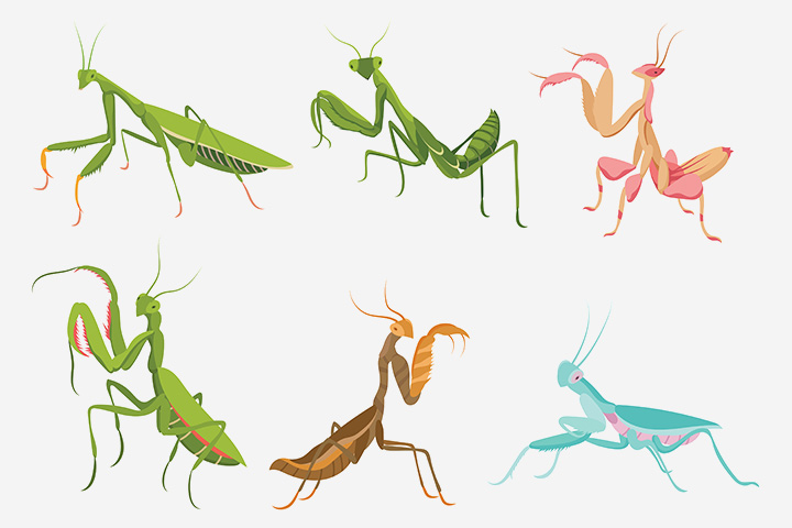 The mantid and cockroach order (Dictyoptera)