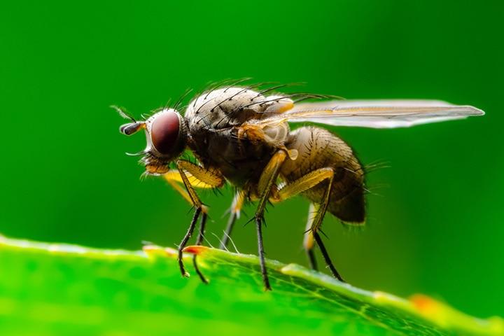True fly order (Diptera)