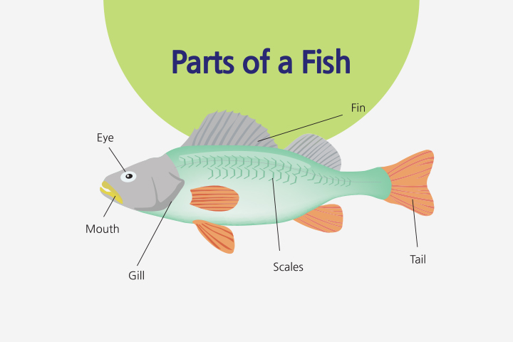 Anatomy of a fish