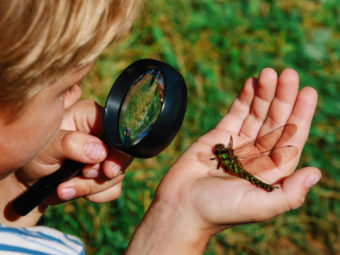 Insects For Kids: Characteristics, Types, Life Cycle And Facts