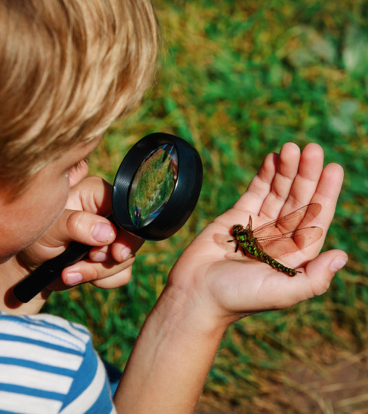 Insects For Kids Characteristics, Types, Life Cycle And Facts