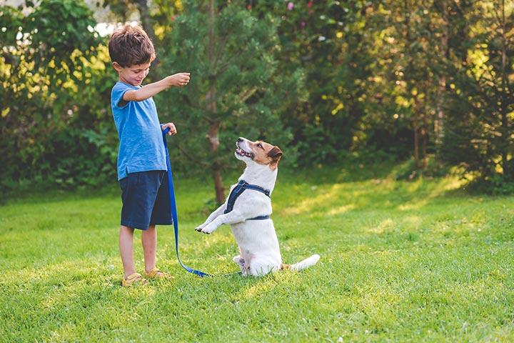 Perform pet tricks