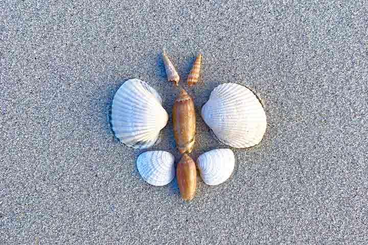 Seashell butterfly
