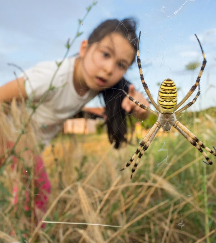 Spider Bites On Children: Symptoms, Treatment And Home Remedies