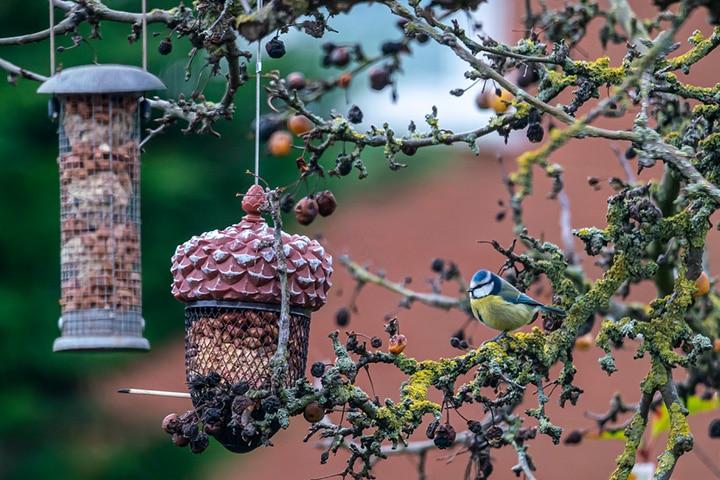 metal mesh bird feeder