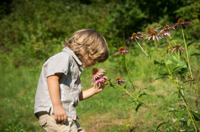 Echinacea For Children: Safety, Uses, Dosage And Precautions